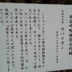 日高川町 ウバメガシ