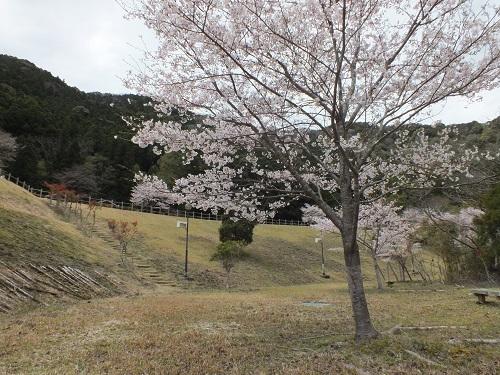 鳴滝キャンプ場2