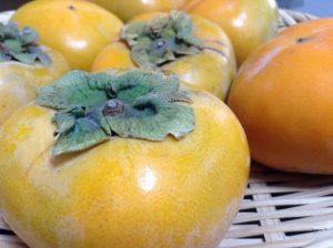 日高川町 たねなし柿