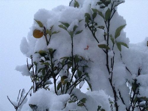 和歌山,日高川町,雪,積雪,三線教室,三線教室シヨラー,