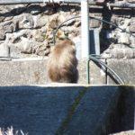 猿,害獣駆除,日高川町