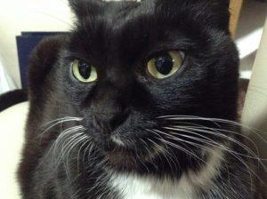 山寺の和尚さん,看板猫,飼猫