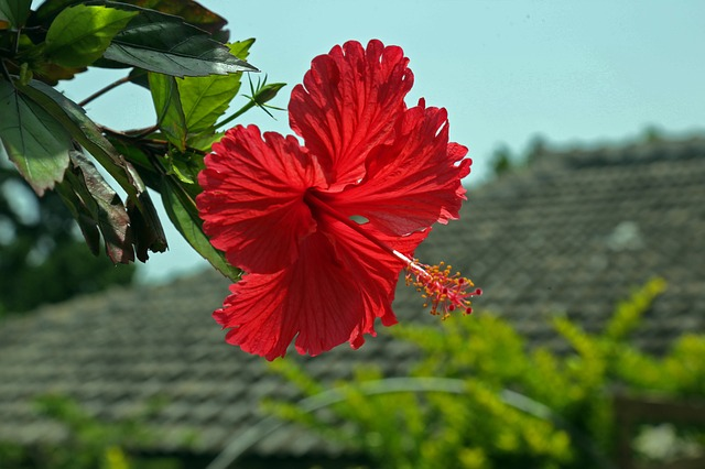 沖縄TVクイズシュリオネア, 沖縄,一番美味しい食べ物,イラブチャー,ナーベラー,ヒラヤーチー,空気