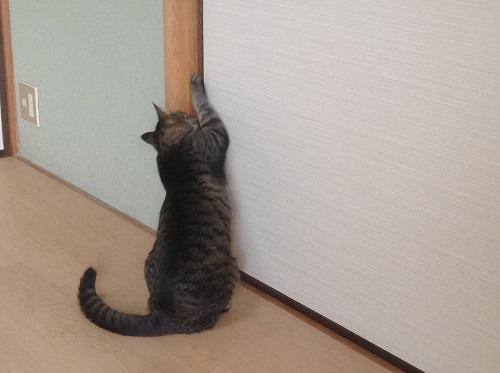 看板猫の一日