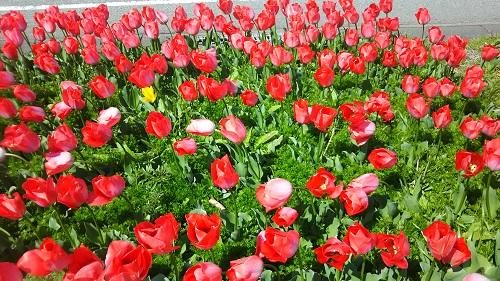 県道26号|御坊美山線の花畑
